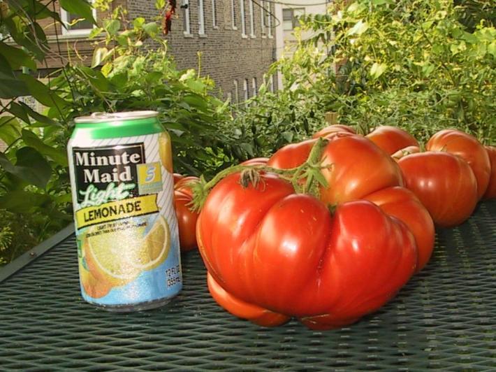 big-tomato